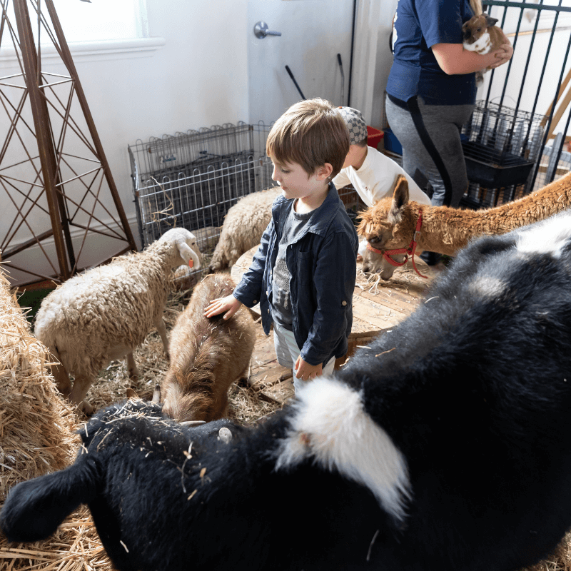 Petting Zoo Image